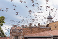 Bird Flying Over Roofs Royalty Free Stock Photography - 27657427