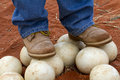 Ostrich Eggs 1 Royalty Free Stock Photo - 27669075
