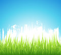 Green Spring Background Royalty Free Stock Photos - 27675858
