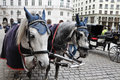 Black And White Horses And Carriage Royalty Free Stock Image - 27682086