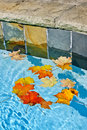 Fall Leaves Floating In Pool Stock Photo - 27689800
