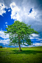Lonely Tree Stock Image - 2774291