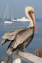 A Pelican Rests On A Fence By The Sea. Royalty Free Stock Photography - 27702887