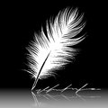 Feather Stock Photos - 27710223