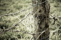 Spiderweb Frozen And Barbed Wire In A Wooden Trunk Royalty Free Stock Image - 27716996