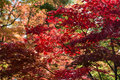 Colored Leaves Royalty Free Stock Image - 27722676