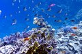 Coral Reef On The Bottom Of Red Sea  With Hard, Fi Stock Photos - 27726423