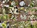 Collage Of White Wildflowers Kings Park West Aust Stock Image - 27749851