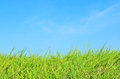 Grass Field And Blue Sky Stock Photo - 27751810
