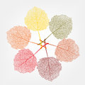 Colour Leaves Royalty Free Stock Photography - 27770877