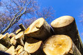 Pile Of Wood In Forest Stock Image - 27777421