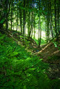 Forest Stock Photography - 2788112
