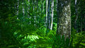 Forest Royalty Free Stock Image - 2789586
