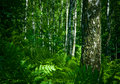 Forest Stock Photo - 2789690
