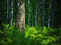 Forest Royalty Free Stock Image - 2789736