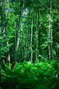 Forest Stock Image - 2789871