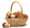 Ceps In Basket Stock Images - 27805604