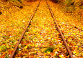 Railway In  The Autumn Forest Stock Photos - 27806773
