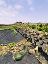 Lanzarote Royalty Free Stock Images - 27809039
