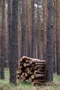 Stack Of Firewood In Forest Royalty Free Stock Image - 27825566
