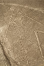 Lines And Geoglyphs Of Nazca, Peru - Spider Stock Image - 27826631
