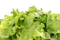 Green Lettuce Royalty Free Stock Images - 27855809
