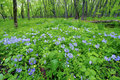 Spring Forest Scenery Illinois Royalty Free Stock Images - 27859459