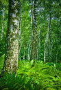 Forest Royalty Free Stock Photo - 2790065