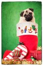 Puppy In Christmas Stocking Stock Photos - 27926113