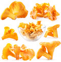 Collection Of Mushroom Chanterelle Royalty Free Stock Image - 27938766