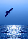 Flying Eagle Over Water Reflecting Sunlight Stock Images - 27939384