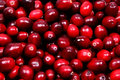 Pile Of Raw Cranberries Stock Image - 27946831