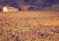 Autumn Vineyards With Small Church Stock Image - 27950451
