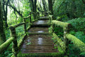Moss Around The Wooden Walkway In Rain Forest Royalty Free Stock Photography - 27970397