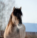 Horse In Winter Stock Image - 27973211