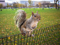 Curious Squirrel Hanging On Park Fence Stock Photo - 27974460