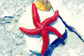 Red Starfish Stock Photos - 28015873