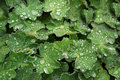 Dew Drops On Leaves Stock Photo - 28054490