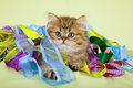 Cute Cat With Colorful Ribbons Stock Images - 28076554