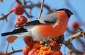 Bird Royalty Free Stock Images - 28099039