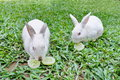 Two Rabbits Are Eating Cucumbers. Stock Photos - 28099103