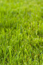 Green Grass Texture Royalty Free Stock Photos - 2810778