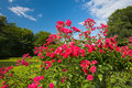 Roses In The Park Stock Images - 2819204