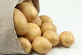 Crop Of Farm Potatoes Royalty Free Stock Image - 28100766