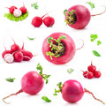 Big And Small Red Radish Royalty Free Stock Images - 28101559
