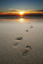 Footprints In Sand At Beach Royalty Free Stock Image - 28106976
