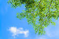 A Tree With Blue Sky Royalty Free Stock Photography - 28110887