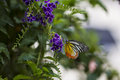 Butterfly And Flower Stock Image - 28115101