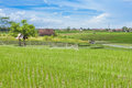 Paddy Field Stock Photo - 28149220