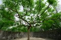 Old Trees In The Old Summer Palace Royalty Free Stock Photo - 28155415